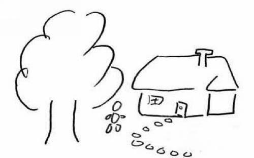 T关于树            1,这是什么树(常绿树,落叶树)?